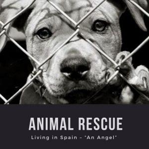 "Living in Spain – ""An Angel"" – Animal Rescue"